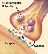 synapse, receptor, neurotransmitter molecules